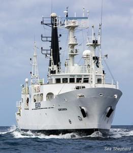 The Sea Shepard